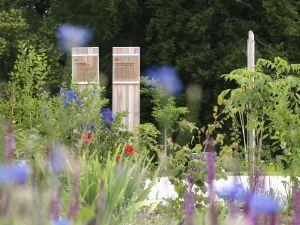 TCM-Arzneipflanzen-Garten