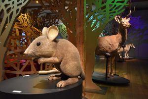 Grimms Tierleben - Tiere in Märchen und Forschung