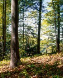 Wild auf Wald