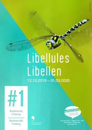 Libellules - #1 Biodiversité Fribourg