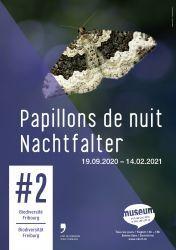 Papillons de nuit - #2 Biodiversité Fribourg
