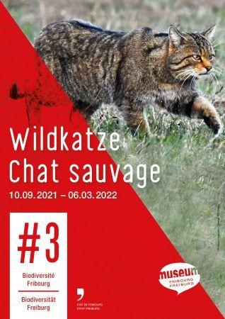 Chat sauvage - #3 Biodiversité Fribourg