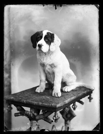 Emil Kreis. Bilder aus dem Fotoarchiv des ersten Krienser Fotografen