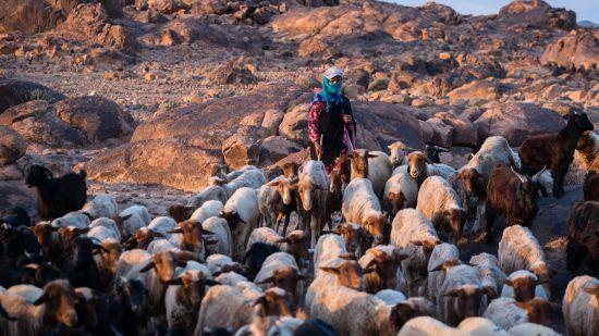 Nomaden auf Zeit – Bilder einer Familie aus Morokko