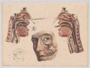 «Durch Wände und Schichten. Querschnitte in Kunst und Wissenschaft»