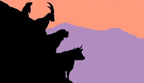 tierisch schweizerisch: Kuh, Murmeli, Steinbock und Bernhardiner