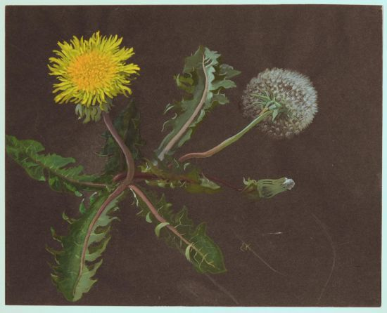 Growing – Blossoming – Wilting: Ernst Kreidolf and Plants
