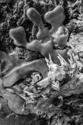 WELTENGUSS-EINE LITERARISCH-FOTOGRAFISCHE INTERPRETATION