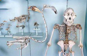 Skelette-die grosse Knochenschau