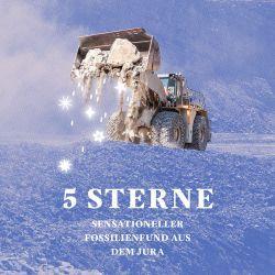5 Sterne - Sensationeller Fossilienfund aus dem Jura