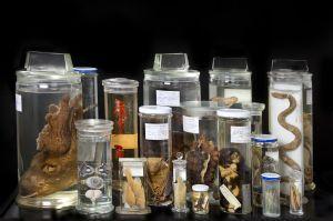 Cabinet de curiosités – collection exposée