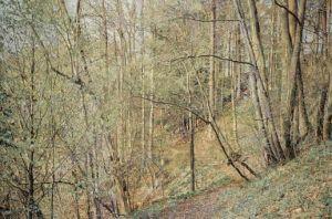 Franz Gertsch. Franz Gertsch. Frühling, Sommer, Herbst und Winter