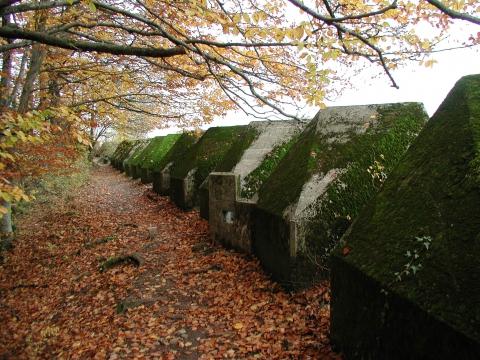 le sentier des Toblerones en automne à Gland