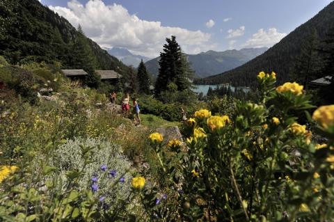 Jardin bot. alpin Flore-Alpe © Valais Promotion / Ch. Perret