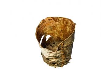 Birkenbehältnis, wie es Ötzi bei sich trug