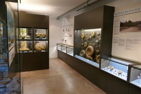 Ausstellung Bereich Fossilien