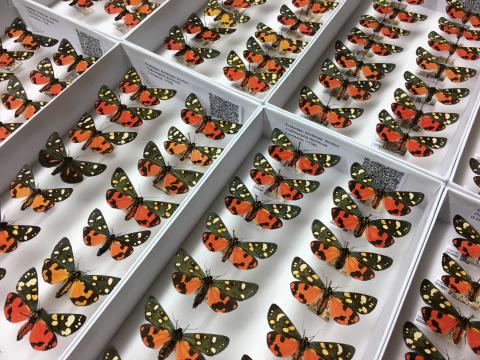 Zu sehen sind mehr als 2 Millionen Insekten!