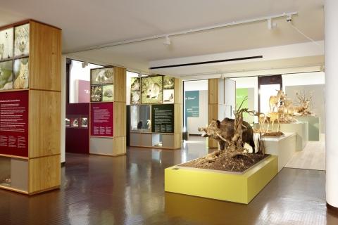 Blick in die permanente Ausstellung des Bündner Naturmuseums