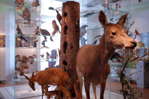 Tiere und Pflanzen des Waldes in der Dauerausstellung