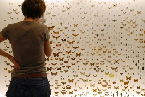 Wand mit 900 einheimischen Insektenarten