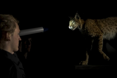 Wildes Baselbiet. Tieren und Pflanzen auf der Spur