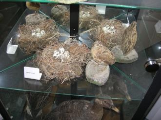 Vögel mit Nestern
