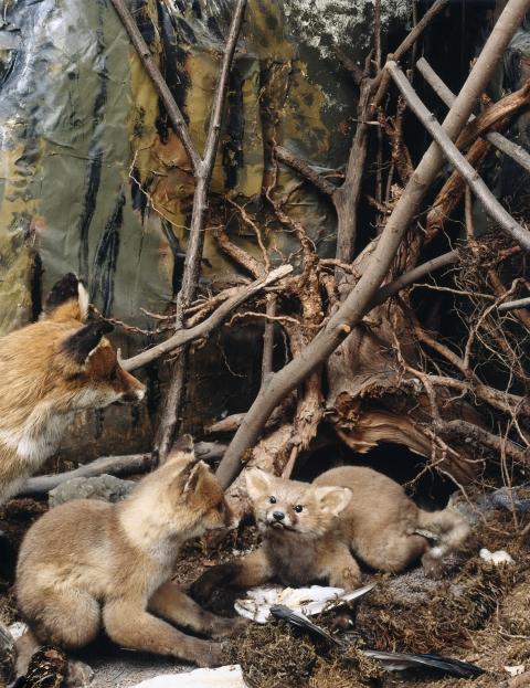 Diorama einer Fuchsfamilie
