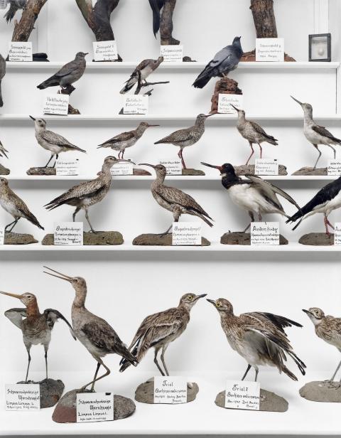 Ausschnitt aus der immensen Sammlung präparierter Vögel