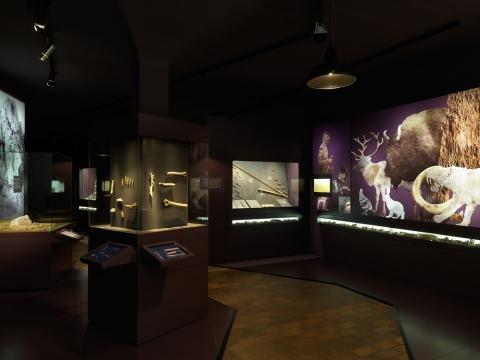 Blick in die neu eingerichtete Archäologie-Ausstellung