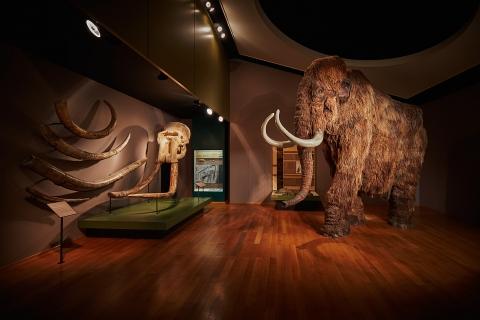 Das Wahrzeichen des Museums Foto: Gregor Brändli