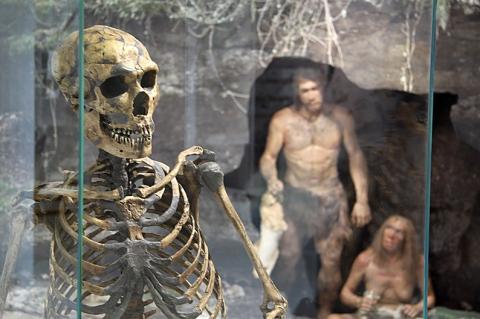 Neanderthaler Skelett und Rekonstruktion