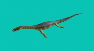 Lebensmodell Ceresiosaurus, Mitteltrias, Monte San Giorgio