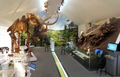 Vue de l'exposition du musée