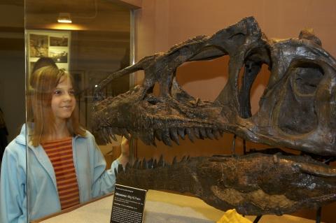Begegnung mit einem echten Allosaurier
